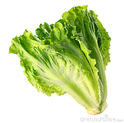 Free Lettuce Stock Images - 16672064