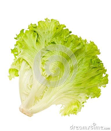 Free Lettuce Stock Image - 28598961
