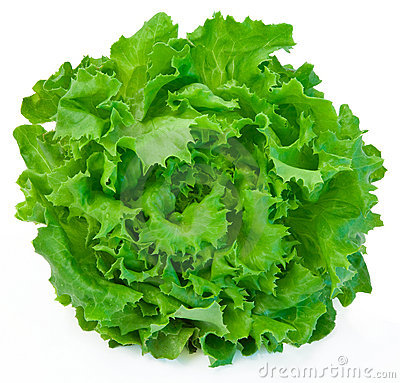 Free Lettuce Royalty Free Stock Photo - 3220935