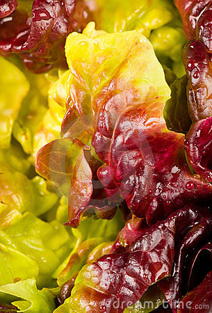 Free Lettuce Closeup Stock Photo - 23372000