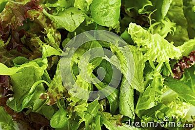 Lettuce variation