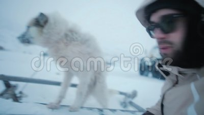 Leuke dakloze hond in het midden van het Noordpool spelen met een mens stock videobeelden
