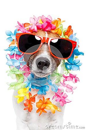 Leus hawaianos y gafas de sol del perro divertido