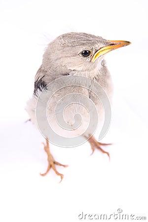 Levendig vogeltje