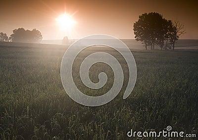 Lever de soleil brumeux