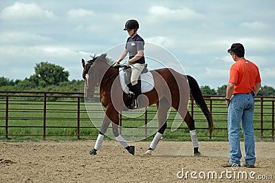 Lição de equitação do cavalo