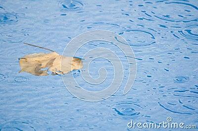 Liść w basenie