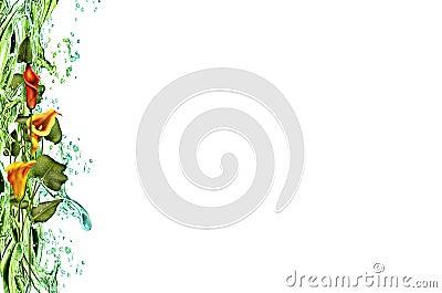 Liana flowers