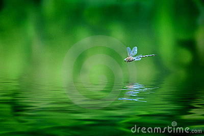 Libelle-Reflexion