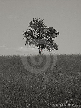 Libertà & solitudine 1 - bw