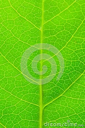 Licença verde