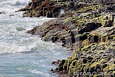 Lichen Covered Rocky Shore