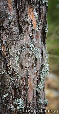 Lichen growing on tree bark