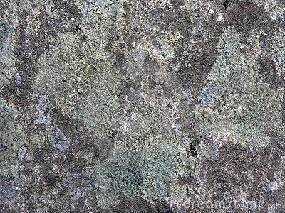 Lichen and Rock Abstract
