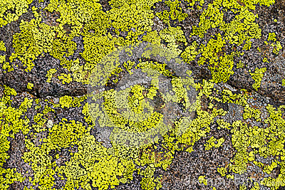 Lichen on Rock Background Texture Pattern
