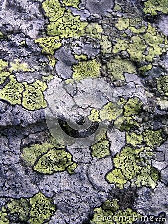 Lichen stone texture