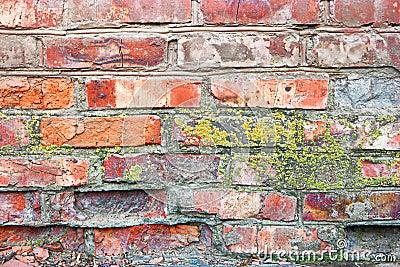Lichen sur un mur de briques mur de briques rouge antique - Enlever la mousse sur un mur exterieur ...