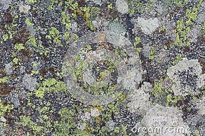 Lichen textures