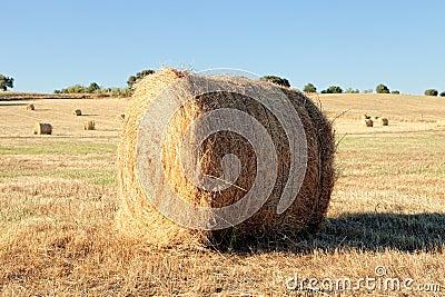 Lie a straw stack