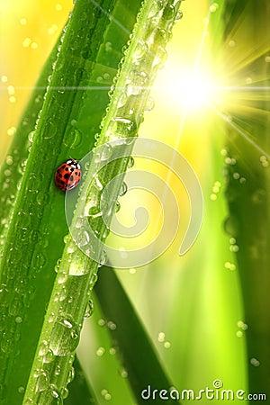 Lieveheersbeestje dat een blad beklimt