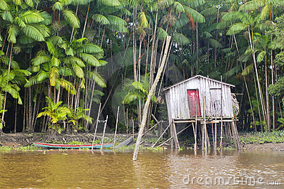 Life in the Amazon Jungle