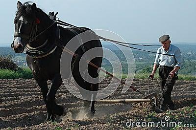 Life on Farm 1