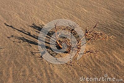 Life in Libyan desert
