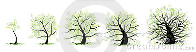 Life stages of tree