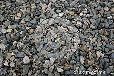 Life between stones