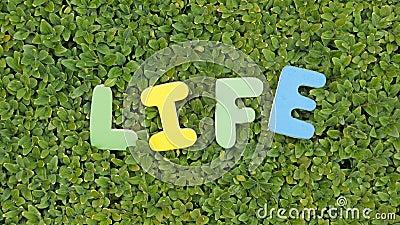 Life written