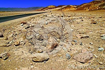 Lifeless landscape