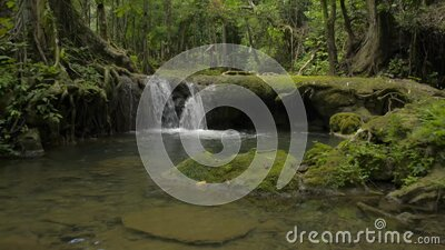 Lifting down shot of beautiful scenery of small waterfall that flowing from the jungle through the green plants. stock footage