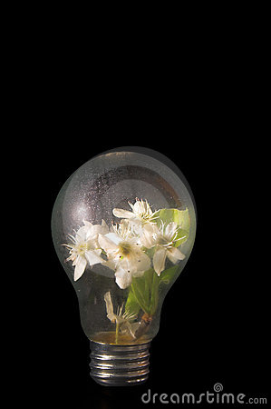 Light Bulb Flowers