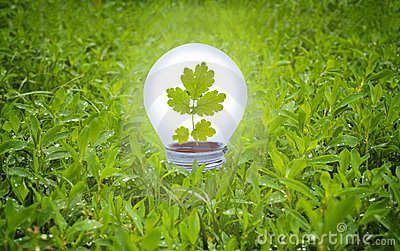 Light bulb in grass.