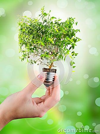 Free Light Bulb In Female S Hand Stock Image - 51221161
