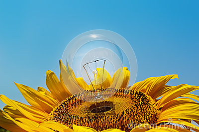 Light bulb in sunflower