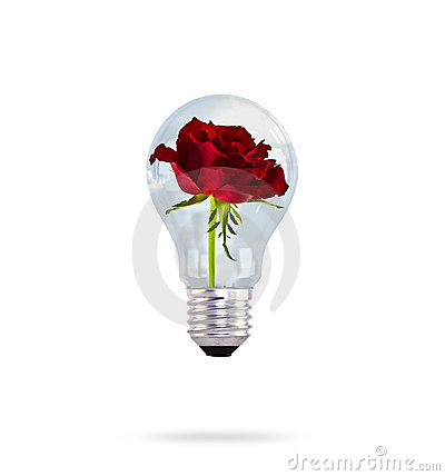 Free Light Bulb With Beautiful Rose Flower. Stock Image - 23725111