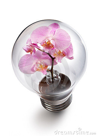Light bulb witn Orchid flower
