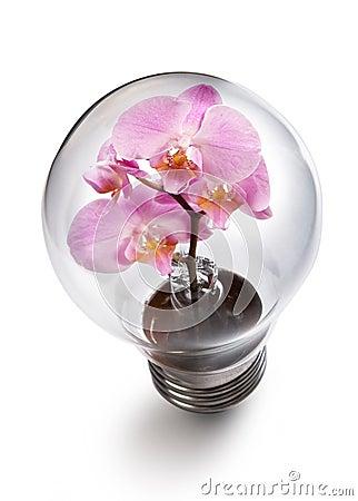 Light bulb witn Orchid flower
