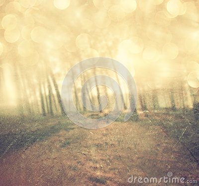 Light burst among meadow trees. filtered image.