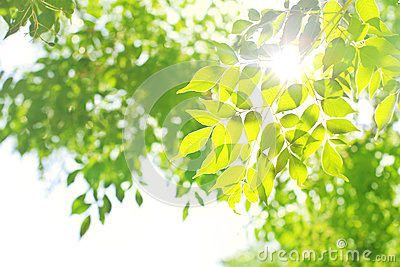 Light with green leaves