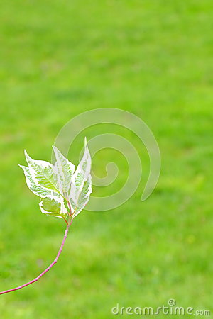 Light green tree branch on the grass background