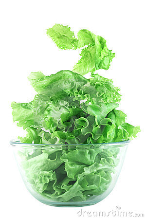 Light lettuce salad concept