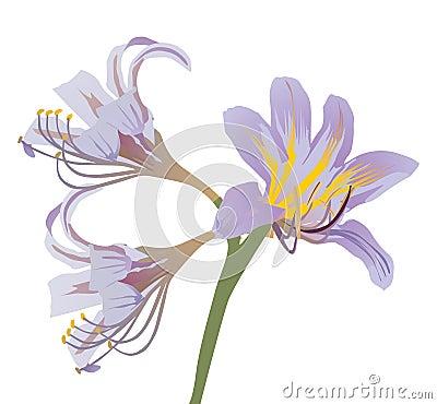 Light lilac lily illustration