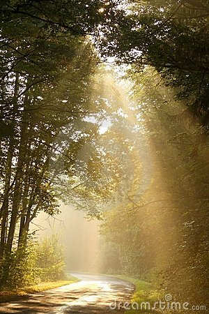 Free Light Of The Rising Sun Falls In The Autumn Woods Stock Image - 11047121