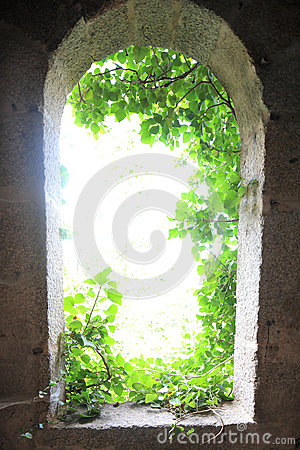 Light from outside with leaves