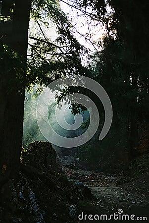 Light & path