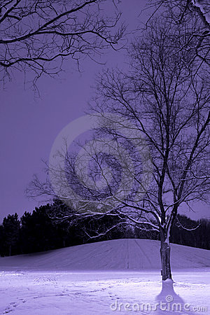 Light Post behind the Tree, Winter Scene