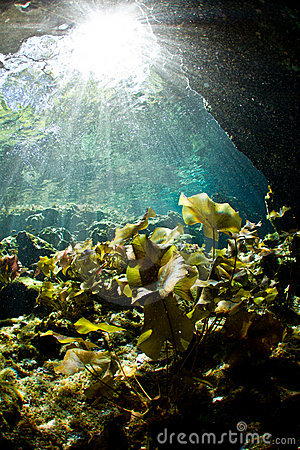 Light rays falling on lily pads in a cenote