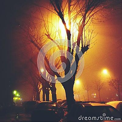Light rays and tree